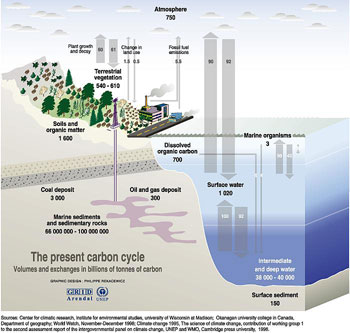 carbon cycle depiction